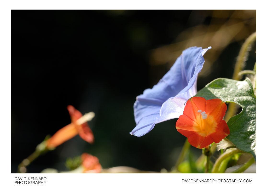 Violet and Orange flowers