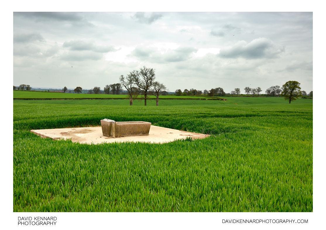 Cattle trough in wheat field
