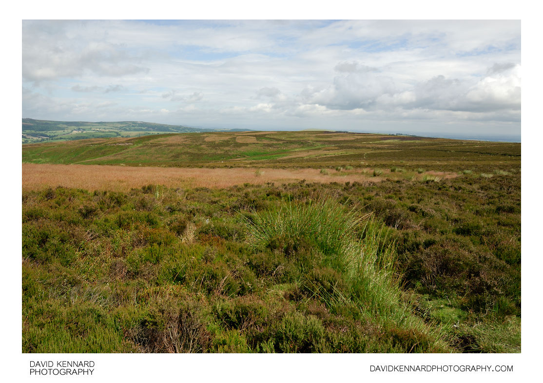 Heather & Grasses on the Long Mynd