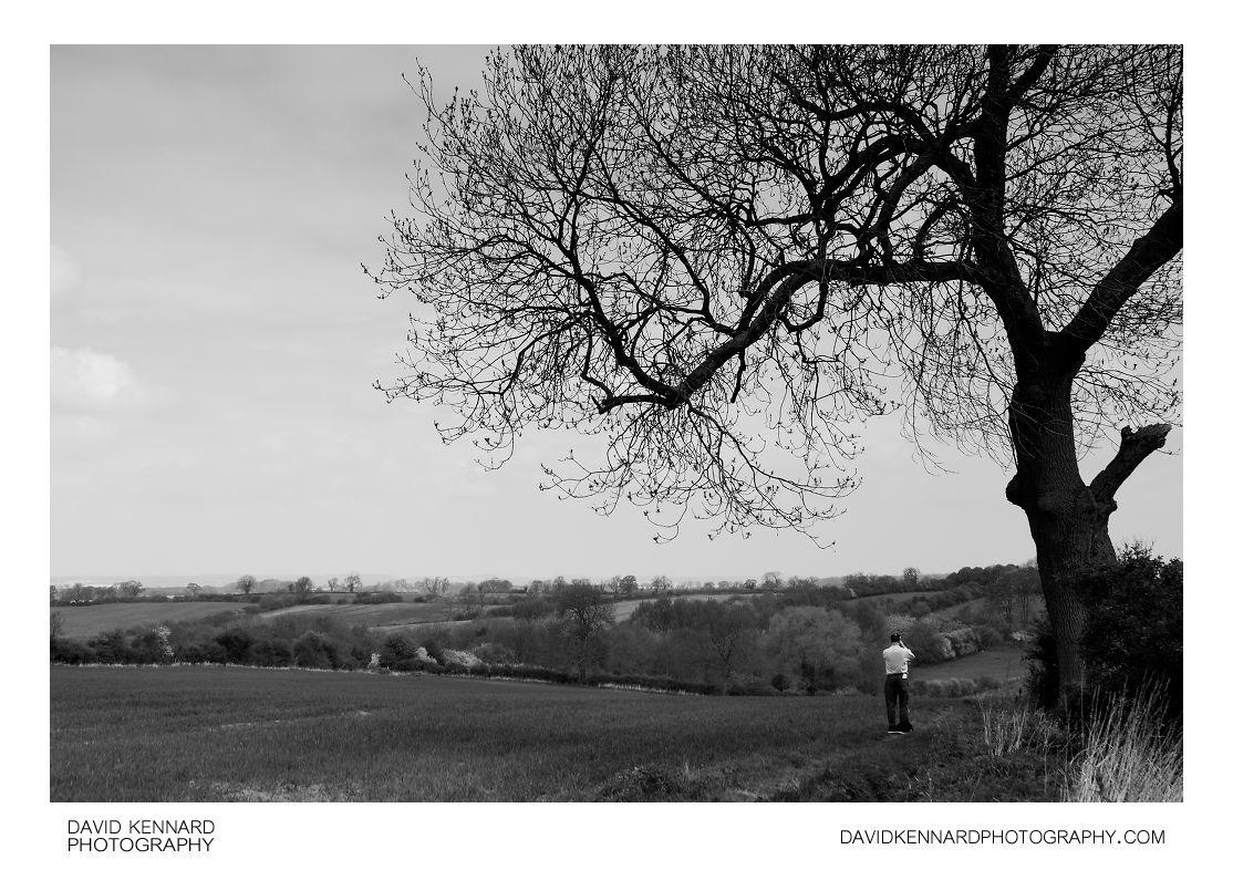 Tree awaiting spring