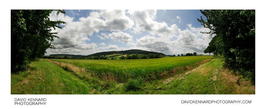Field of Green Barley