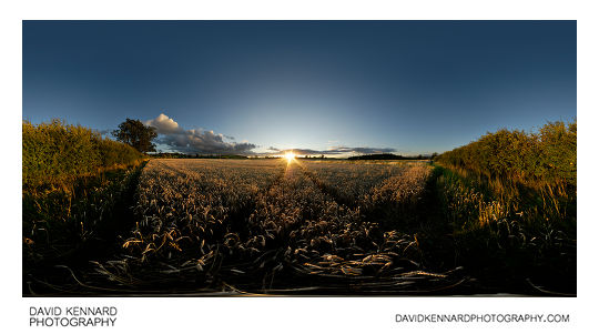 Sunset over wheat field between East Farndon and Market Harborough