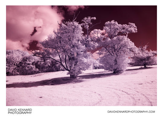 Infrared photo of trees at Corby Boating Lake