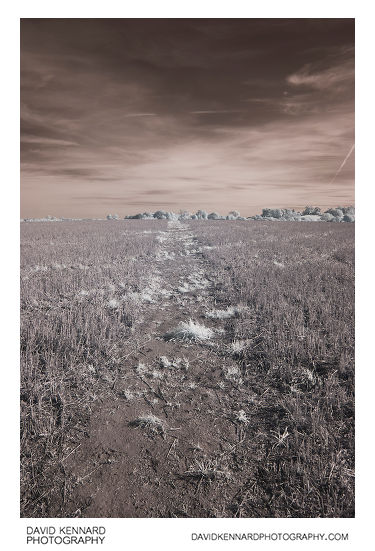 Infrared photo of the path across a field near Market Harborough