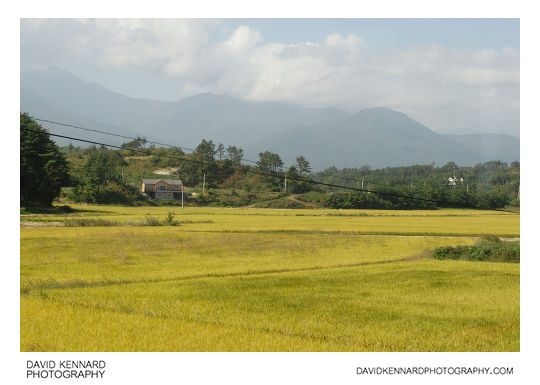 Rice fields, Powol-ri