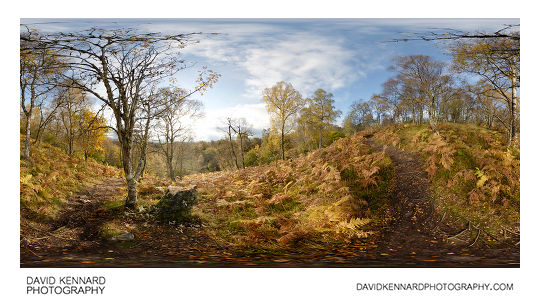 Woodland near foot of Meall Fuar-mhonaidh in autumn