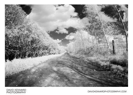Farm track B&W Infrared