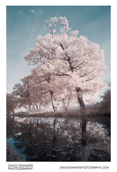 [IR] Trees along the GU Canal