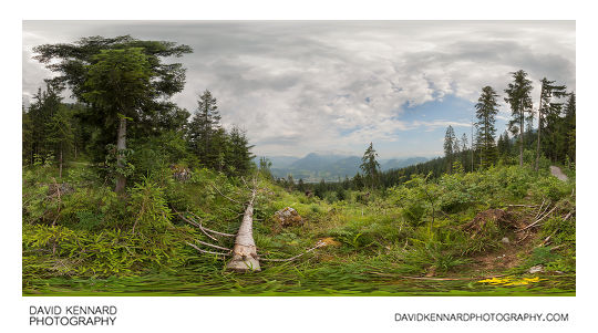 Forest clearing on Kehlstein