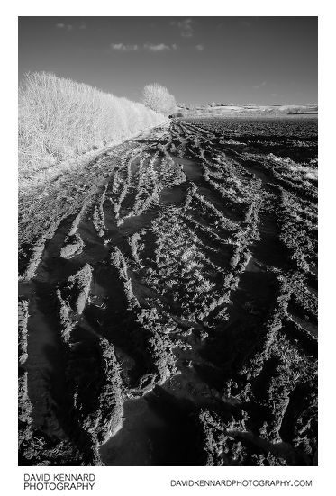 Muddy track in IR
