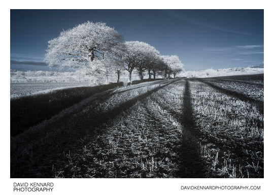 Trees and long shadows in infrared