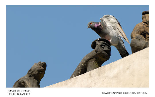 Pigeon on Palgak-jeong roof