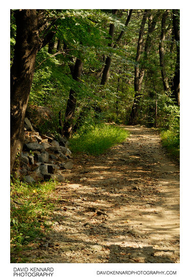 Path through woods on Namsan (남산), Seoul, South Korea