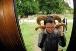 Horn headed Bo