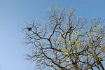 Birds nest in tree
