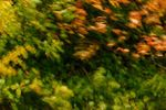 Blurred leaves abstract