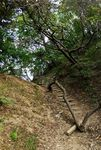 Path through woods at the Korean Folk Village