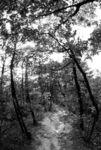 Path down Buramsan
