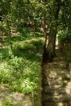 Steps in the secret garden, Changdeokgung palace