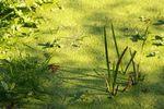 Reeds and algae