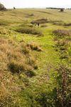 Path through field, Great Doddington