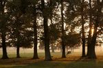 Trees and autumn mist at Thorpe Lubenham