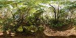 Mountain path, Hakone