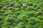 Small grass mounds