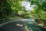Road on Namsan