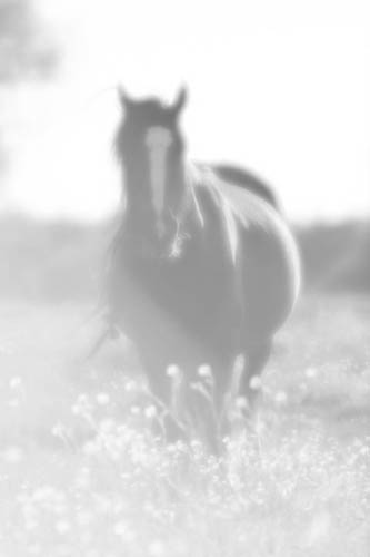 Black horse High key Black & White version