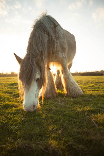 Photo taken with Sigma 24mm f/2.8 macro AF lens where horse was blocking the sun, thus preventing flare