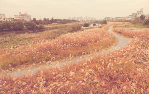 Low contrast image of long grasses growing on the bank of Yeongsan River (영산강), Gwangju
