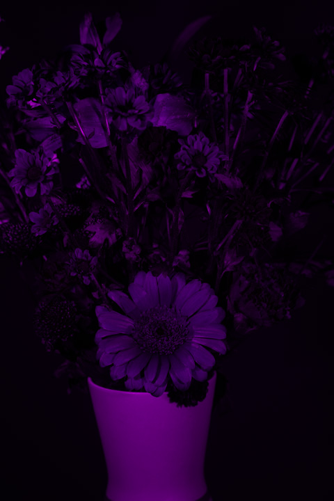 UV photograph of a vase of flowers taken with the 7artisans 50mm f/1.1 lens