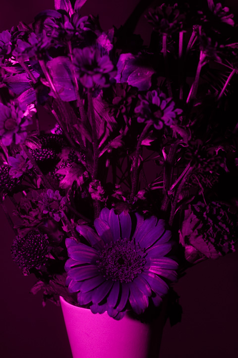 UV photograph of a vase of flowers taken with the EL-Nikkor 50mm f/2.8 N lens