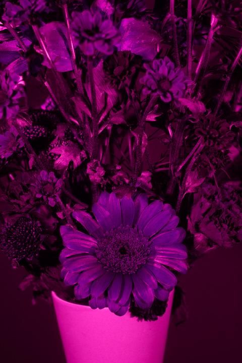 UV photograph of a vase of flowers taken with the Helios 58mm f/2.8 lens