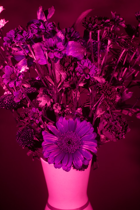 UV photograph of a vase of flowers taken with the Novoflex 35mm f/3.5 lens