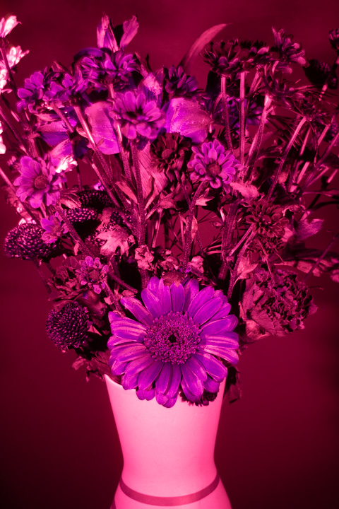 UV photograph of a vase of flowers taken with the Petri 35mm f/3.5 lens
