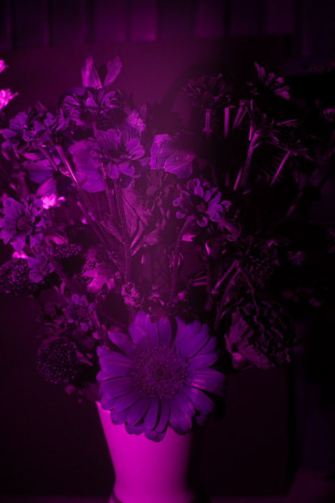 UV photograph of a vase of flowers taken with the Sony 28mm f/2 lens