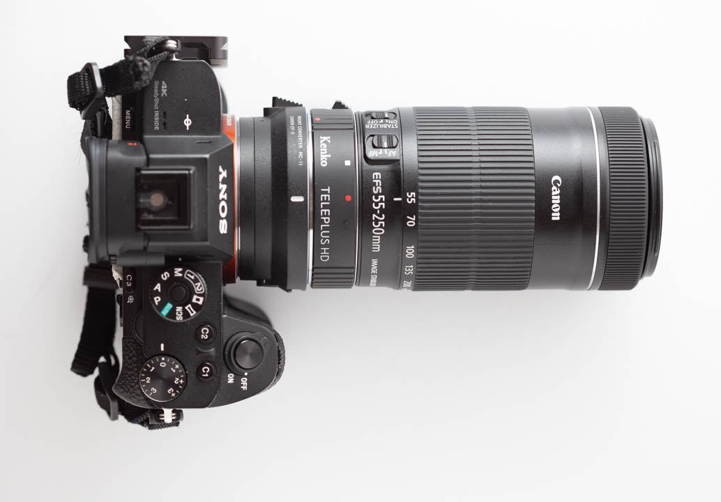 Sony A7R II with Sigma MC-11 adapter, Kenko Teleplus HD teleconverter, and Canon EF-S 55-250mm f/4-5.6 IS STM lens