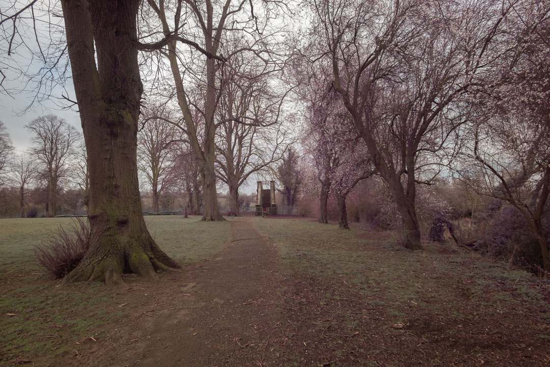 Photo of path and trees in a park taken on a full spectrum camera with a wide-angle lens with Tiffen T1 filter