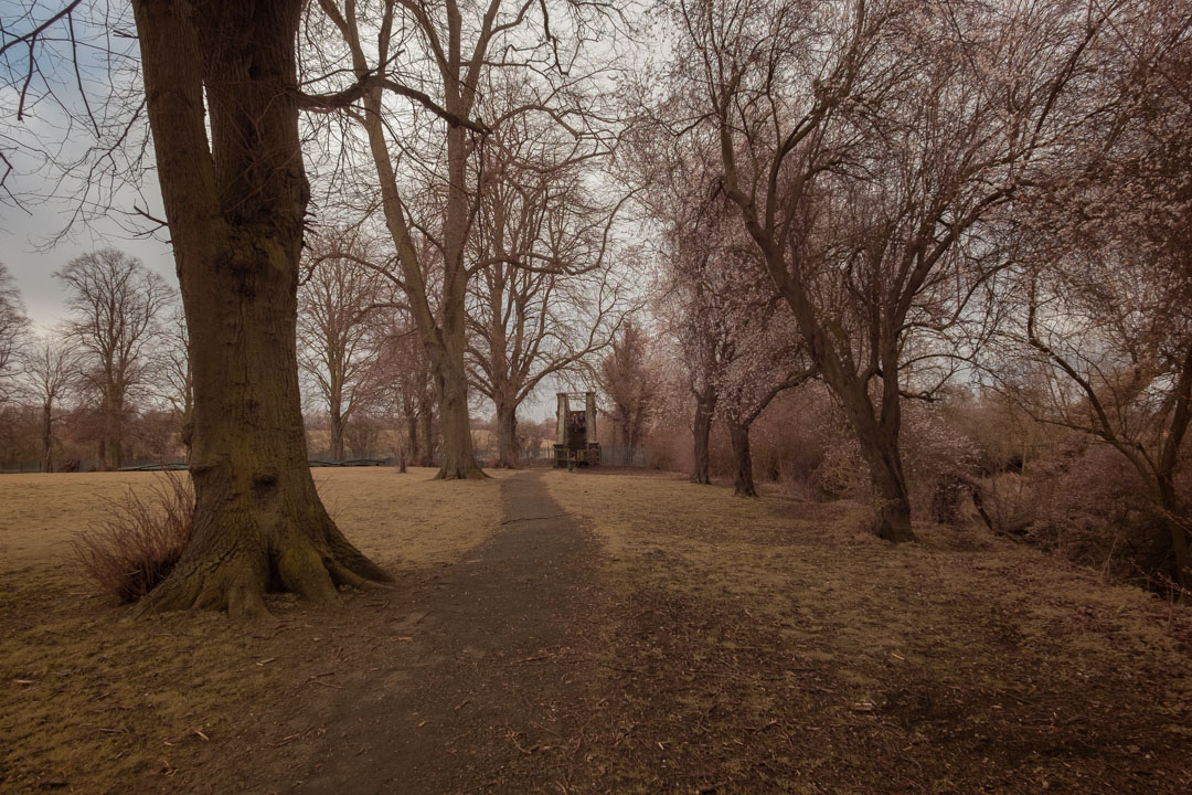 Photo of path and trees in a park taken on a full spectrum camera with a wide-angle lens with no filter