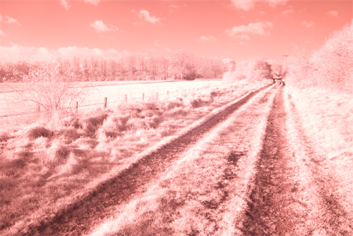 Photo taken with the Fuji IS-Pro and Hitech 85 Infrared filter in Cokin P filter holder