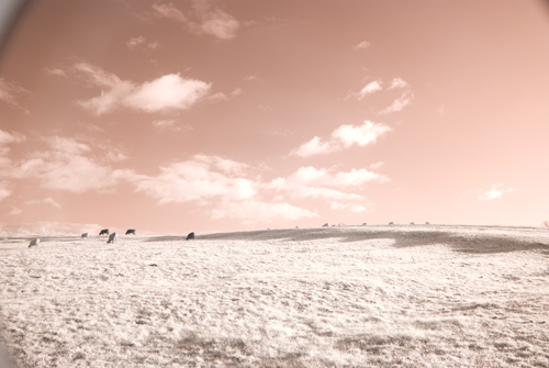 Photo taken with the Fuji IS-Pro and B+W 491 Redhancer filter and Hitech 85 Infrared filter in Cokin P filter holder