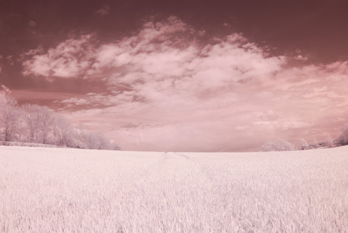 Photo taken with Tokina 10-17mm fisheye lens at 17mm on Fuji IS Pro with Cokin P mount Hitech infrared resin filter