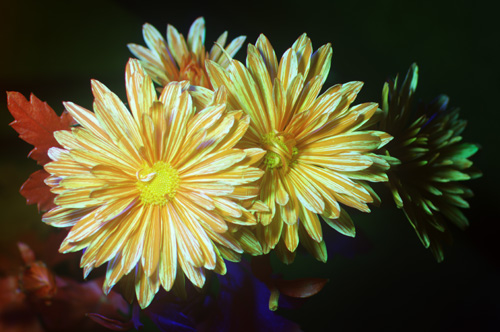 Multispectral (UV-Vis-IR) photo of flower