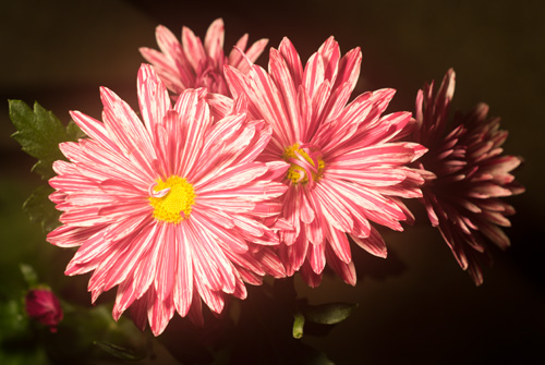 Photo of flower in visible light