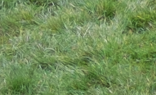 200% crop of grass from image taken using Fujifilm X-A1 camera and converted through Adobe Camera RAW