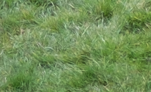 200% crop of grass from image taken using Fujifilm X-M1 camera and converted through Adobe Camera RAW