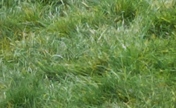 200% crop of grass from image taken using Fujifilm X-M1 camera and converted through Capture One Pro