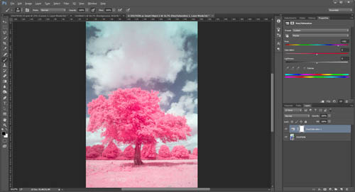 Image with colours changed to give pink foliage just by using a hue adjustment
